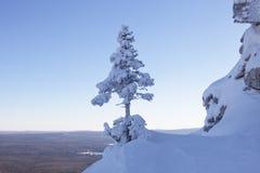 33c 1月横向俄国温度ural冬天 包括的雪云杉 库存图片