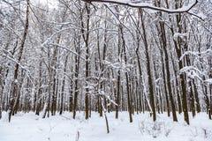 33c 1月横向俄国温度ural冬天 包括的雪结构树 免版税库存照片