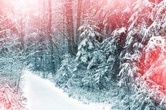 33c 1月横向俄国温度ural冬天 包括的雪结构树 免版税库存图片