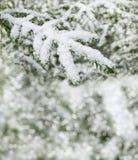 33c 1月横向俄国温度ural冬天 包括的雪结构树 库存照片