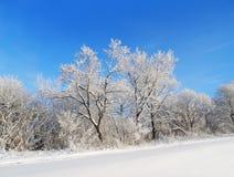 33c 1月横向俄国温度ural冬天 包括的雪结构树 库存图片