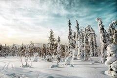 33c 1月横向俄国温度ural冬天 卡累利阿 俄国 免版税库存照片