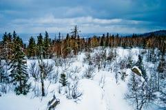 33c 1月横向俄国温度ural冬天 国家公园Taganay,俄国 免版税图库摄影