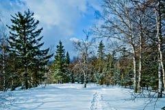 33c 1月横向俄国温度ural冬天 国家公园Taganay,俄国 免版税库存图片