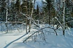 33c 1月横向俄国温度ural冬天 国家公园Taganay,俄国 图库摄影
