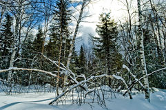 33c 1月横向俄国温度ural冬天 国家公园Taganay,俄国 免版税库存照片