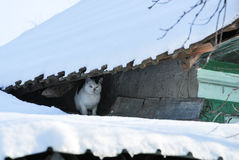 33c 1月横向俄国温度ural冬天 在屋顶的逗人喜爱的猫咪 免版税库存照片