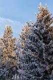 33c 1月横向俄国温度ural冬天 在树的弗罗斯特霜 图库摄影