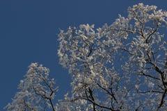 33c 1月横向俄国温度ural冬天 在树的弗罗斯特霜 库存照片