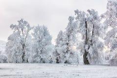 33c 1月横向俄国温度ural冬天 在树的霜 库存照片