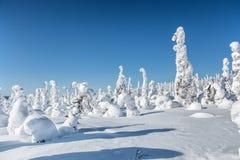 33c 1月横向俄国温度ural冬天 在登上Nuorunen的被雪复盖的树 免版税库存图片