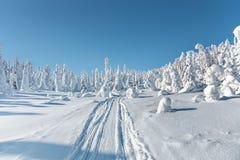 33c 1月横向俄国温度ural冬天 在登上Nuorunen的被雪复盖的树 免版税图库摄影