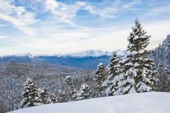33c 1月横向俄国温度ural冬天 在雪的足迹 山森林overcas 图库摄影