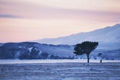 33c 1月横向俄国温度ural冬天 在贝加尔湖的桃红色日落 图库摄影