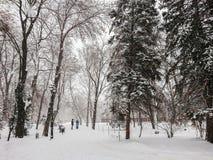 33c 1月横向俄国温度ural冬天 城市公园方式 雪和降雪 人步行 库存图片