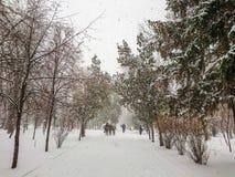 33c 1月横向俄国温度ural冬天 城市公园方式 雪和降雪 人步行 库存照片