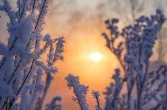 33c 1月横向俄国温度ural冬天 太阳的光芒通过多雪的灌木 免版税库存照片