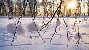 33c 1月横向俄国温度ural冬天 太阳的光芒通过多雪的灌木 图库摄影