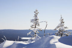 33c 1月横向俄国温度ural冬天 山脉Zyuratkul 积雪的冷杉tre 免版税库存图片