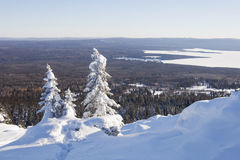 33c 1月横向俄国温度ural冬天 山脉Zyuratkul 积雪的冷杉tre 图库摄影