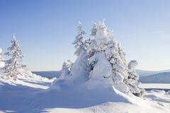 33c 1月横向俄国温度ural冬天 山脉Zyuratkul 积雪的冷杉tre 免版税库存照片