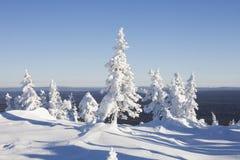 33c 1月横向俄国温度ural冬天 山脉Zyuratkul 积雪的冷杉tre 库存图片