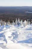 33c 1月横向俄国温度ural冬天 山脉Zyuratkul 积雪的冷杉tre 免版税图库摄影