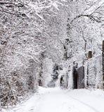 33c 1月横向俄国温度ural冬天 冻结工厂 美好的本质 天气季节 冷 免版税图库摄影
