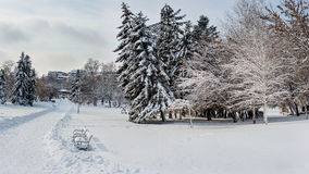 33c 1月横向俄国温度ural冬天 庄严多雪的公园 欧罗巴 库存照片