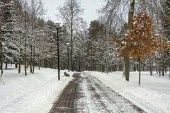 33c 1月横向俄国温度ural冬天 离开的胡同在城市公园 库存图片