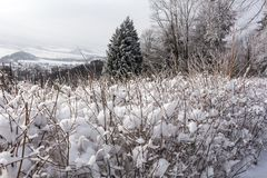 33c 1月横向俄国温度ural冬天 斯诺伊冬天领域和冻冬天植物日落的,自然日落冬天场面 横向农村冬天 免版税库存照片