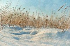33c 1月横向俄国温度ural冬天 斯诺伊冬天领域和冻植物 免版税库存照片