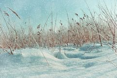33c 1月横向俄国温度ural冬天 斯诺伊冬天领域和冻植物 免版税图库摄影