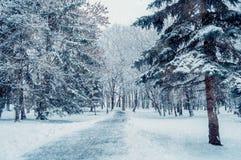 33c 1月横向俄国温度ural冬天 斯诺伊树沿冬天停放在落的雪下 库存照片