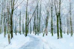 33c 1月横向俄国温度ural冬天 斯诺伊树沿冬天停放,冬天多雪的自然 免版税图库摄影