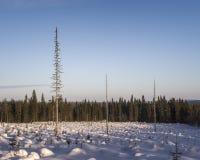 33c 1月横向俄国温度ural冬天 斯诺伊领域和冻树 免版税库存照片