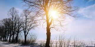 33c 1月横向俄国温度ural冬天 日出 领域和树在雪 宽p 库存照片