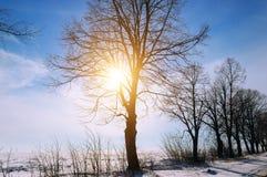 33c 1月横向俄国温度ural冬天 日出 领域和树在雪 免版税库存照片