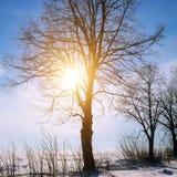 33c 1月横向俄国温度ural冬天 日出 领域和树在雪 图库摄影