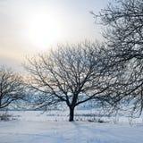 33c 1月横向俄国温度ural冬天 日出 领域和树在雪 库存图片