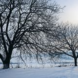 33c 1月横向俄国温度ural冬天 日出 领域和树在雪 免版税库存图片