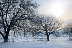 33c 1月横向俄国温度ural冬天 日出 领域和树用锡盖 免版税图库摄影