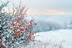 33c 1月横向俄国温度ural冬天 日落 免版税库存图片
