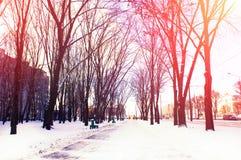 33c 1月横向俄国温度ural冬天 早晨公园点燃了与太阳的柔光 免版税库存图片