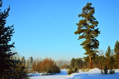 33c 1月横向俄国温度ural冬天 晴天、多雪的河和高杉木 免版税库存图片