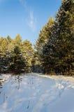 33c 1月横向俄国温度ural冬天 晴天、杉木森林和美丽的云彩在树之间 库存图片