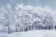 33c 1月横向俄国温度ural冬天 有多雪的冬天树的冬天妙境在冬天森林里 库存图片