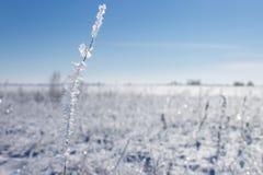 33c 1月横向俄国温度ural冬天 有植物的斯诺伊草甸 库存照片