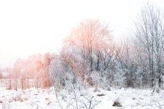 33c 1月横向俄国温度ural冬天 晴朗国家(地区)的日 免版税库存图片