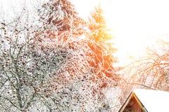 33c 1月横向俄国温度ural冬天 晴朗国家(地区)的日 库存照片